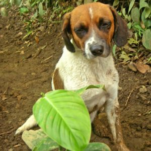 The dog we named Dennys during the Costa Rica race