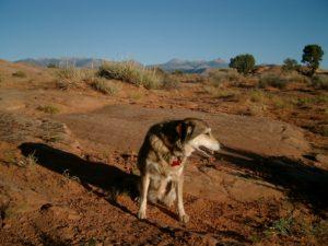 Tango poses in Moab