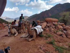Loading camels for the mountain trek